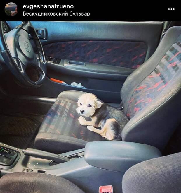 Фото дня: собака-путешественница из Бескудникова