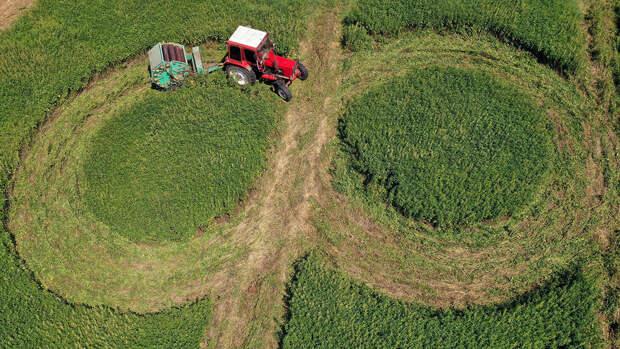 Бизнесу могут разрешить воспроизводство леса на землях сельхозназначения