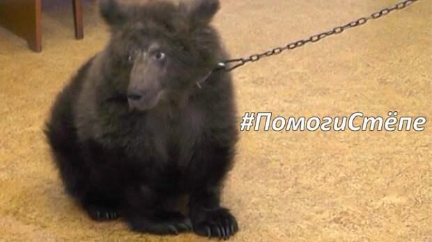 На Южном Урале спасают медвежонка, которого раненного держали на цепи в частном доме