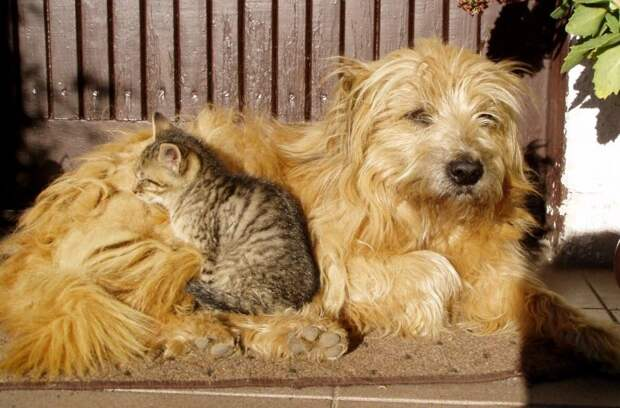 Собака воровала еду, чтобы накормить котят