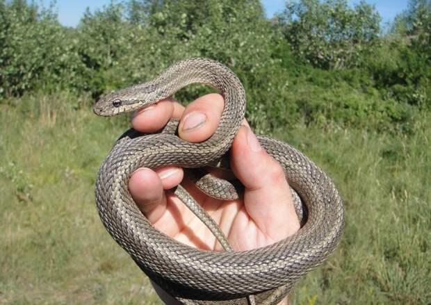 На Кубани змея заползла в детский центр