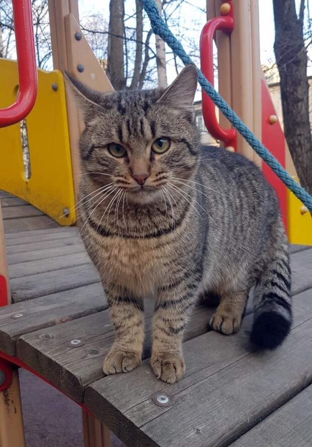 Помогите! Такому доверчивому бывшедомашнему коту на улице не выжить!