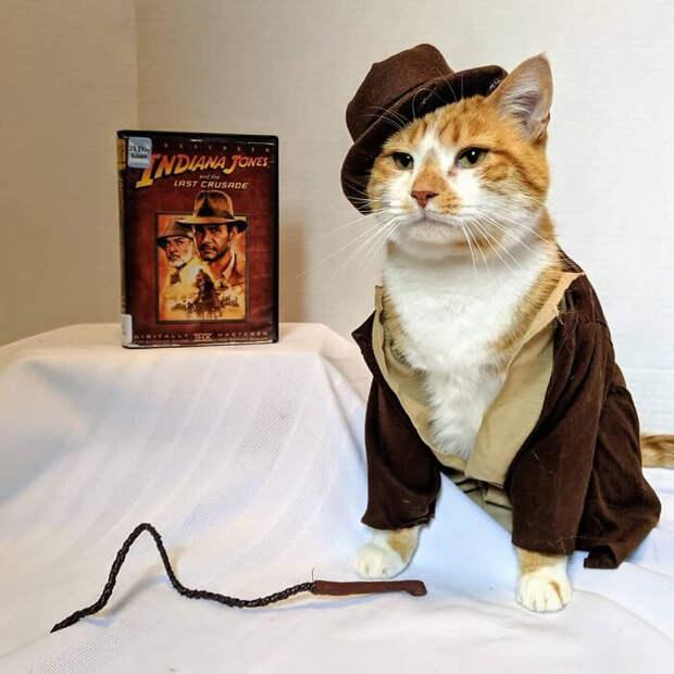 Кот стал «лицом» американской библиотеки