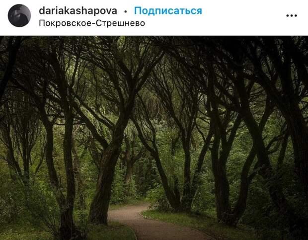 Фото дня: тенистая тропинка в парке «Покровское-Стрешнево»
