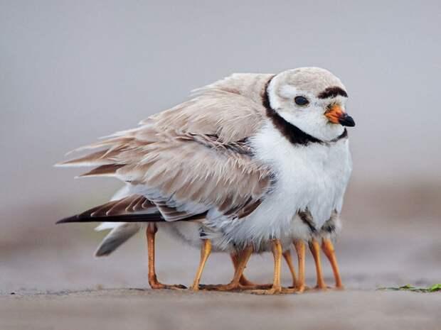 родители животные с их детенышами  птица