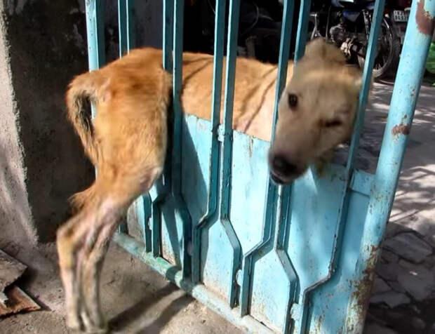 Пёс застрял в заборе, а люди боялись к нему даже подойти! К счастью, всё закончилось чудесно)