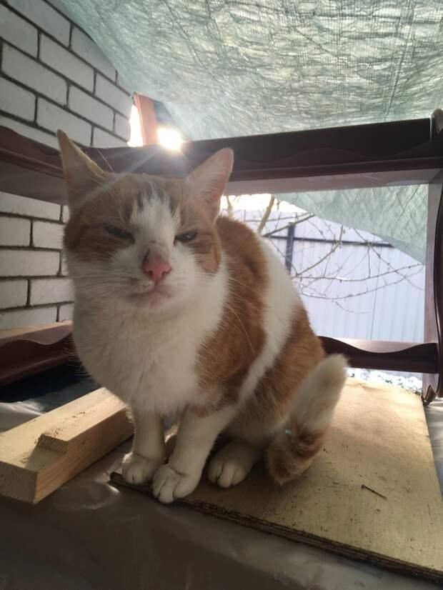 Его подкармливают рабочие, но через 1,5 недели они съезжают. И кот останется пропадать...