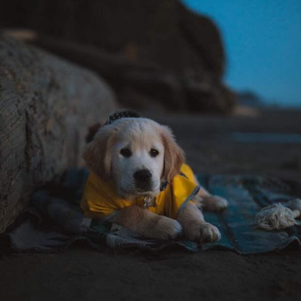 6 фотографий милого щеночка-путешественника