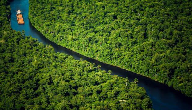 Густые леса Суринама
