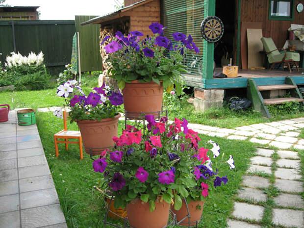 Цветы в горшках на дачном дворе. | Фото: sovetchiki.org.