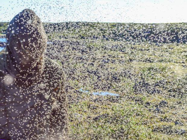 Черная мошка устроила апокалипсис в Ульяновской области: деревни вымерли
