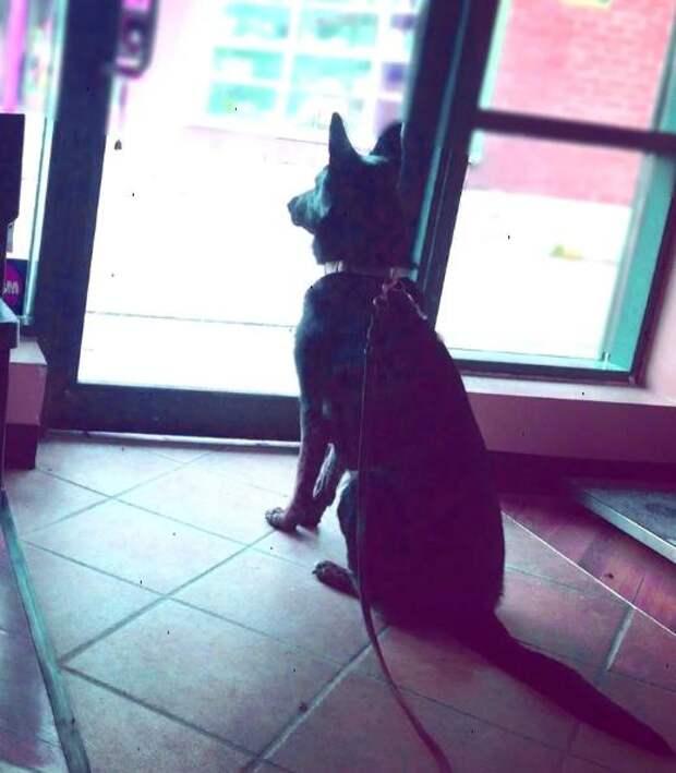 Как собака узнаёт, что хозяин скоро придет домой?
