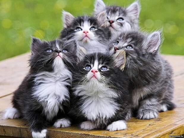 30. Если у вас нет кошки, завести ее себе проще простого. жены, интересное, кошки, юмор