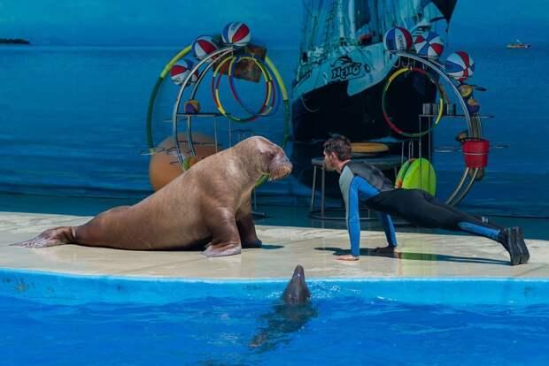В Севастопольском дельфинарии раскритиковали океанариум, где избили китов
