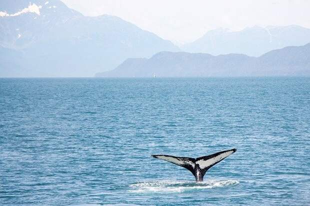 В Мексиканском заливе обнаружили новый вид китов