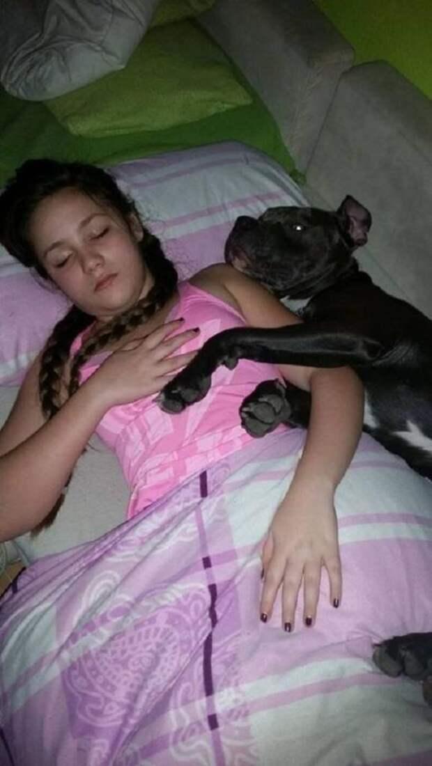 История о заботливом питбуле перевернет ваше представление о бойцовских псах!