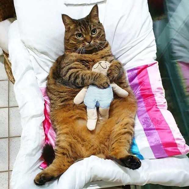 Встречайте Манго — самую харизматичную кошку Сети!