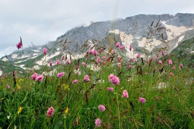 Вид на гору Пшехасу