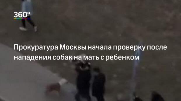 Прокуратура Москвы начала проверку после нападения собак на мать с ребенком