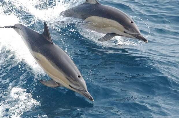 4. Дельфины - очень дружелюбные создания МИФ И ПРАВДА, животные, животный мир, интересные факты, миф, познавательно, факты о животных