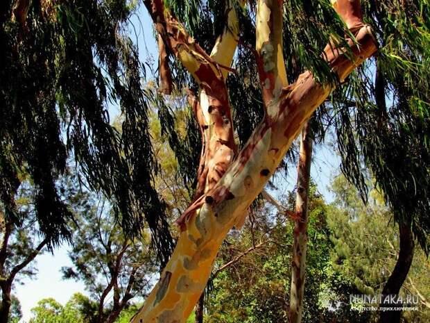 Дерево- радуга