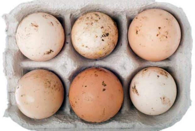 Хранить и использовать грязные яйца.   Фото: Twitter.