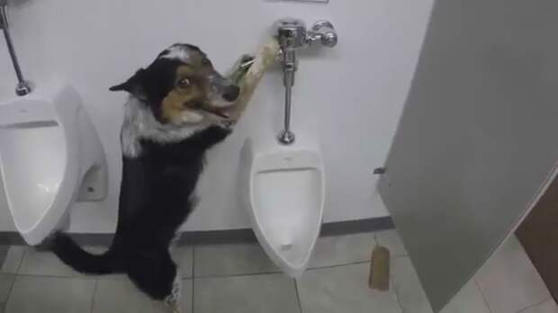 Собака образец поведения в уборной!