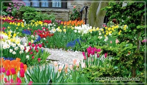 Луковичные цветы в дизайне сада