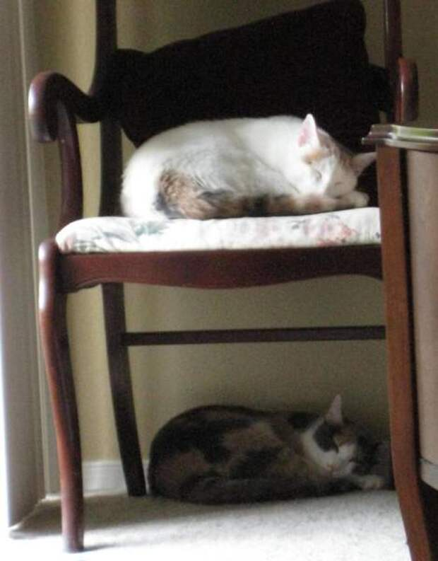 Кошки, которые делают все в унисон (13 фото)