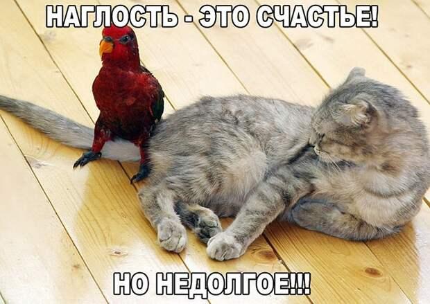 Веселые картинки с надписями про котиков (10 фото)