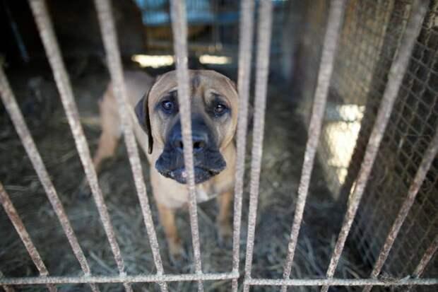 Активисты спасли 200 собак от съедения в Корее