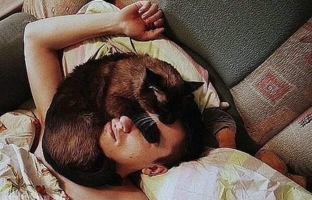 На самом деле котам просто тепло. /Фото: domstrousam.ru.