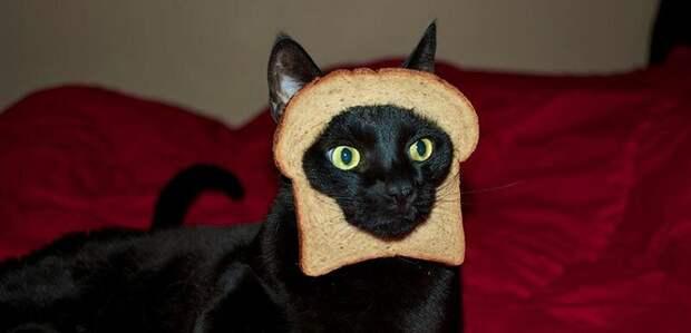 14. Если у вас нет даже пельменей, на четвертый день кошка с удовольствием ест хлеб. жены, интересное, кошки, юмор