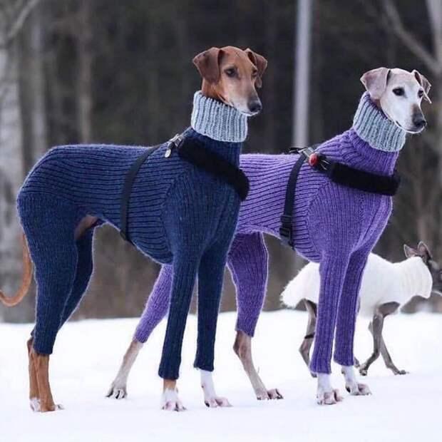 Длинноногие  сучки  в  одних  свитерах