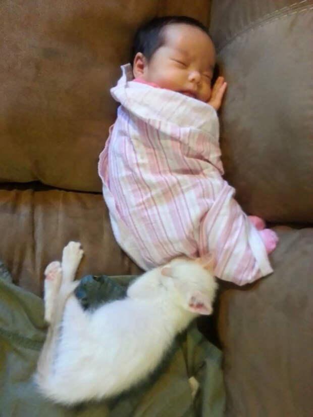 С тех пор они неразлучны и всегда спят вместе  девочка, дружба, кот