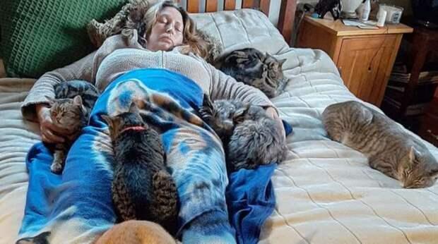 Кошки почувствовали, что хозяйка заболела. Все пятеро тут же пришли к ней и принялись лечить так, как умеют
