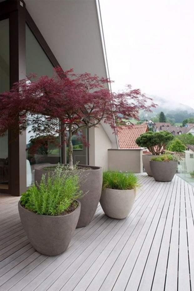 контейнерные растения для японского сада