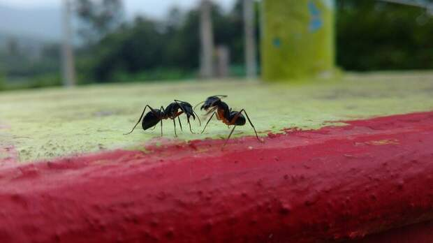 20 интересных фактов о муравьях, которые вы не знали
