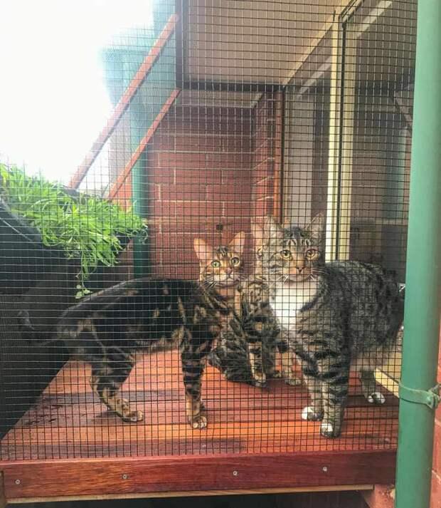 «Кошачьим двориком» может похвастаться не каждый питомец. Но хозяева так любят своих МУРлык, что готовы ради них на все