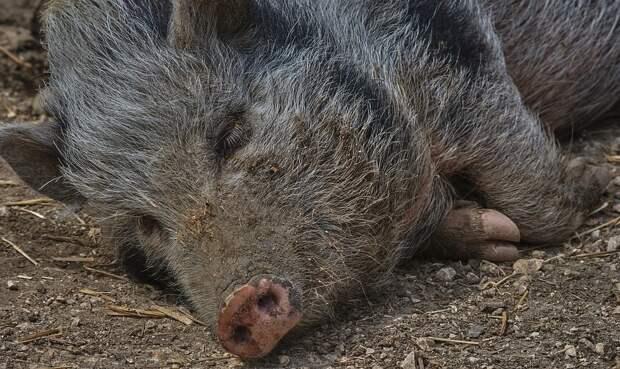 Молния убила стадо кабанов в районе Ай-Петри
