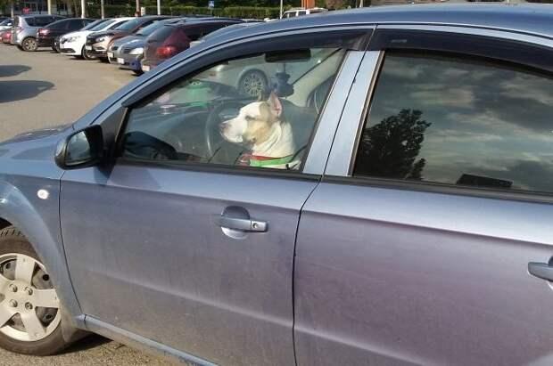 Эксперты рассказали о неочевидных штрафах, которые ждут водителей летом