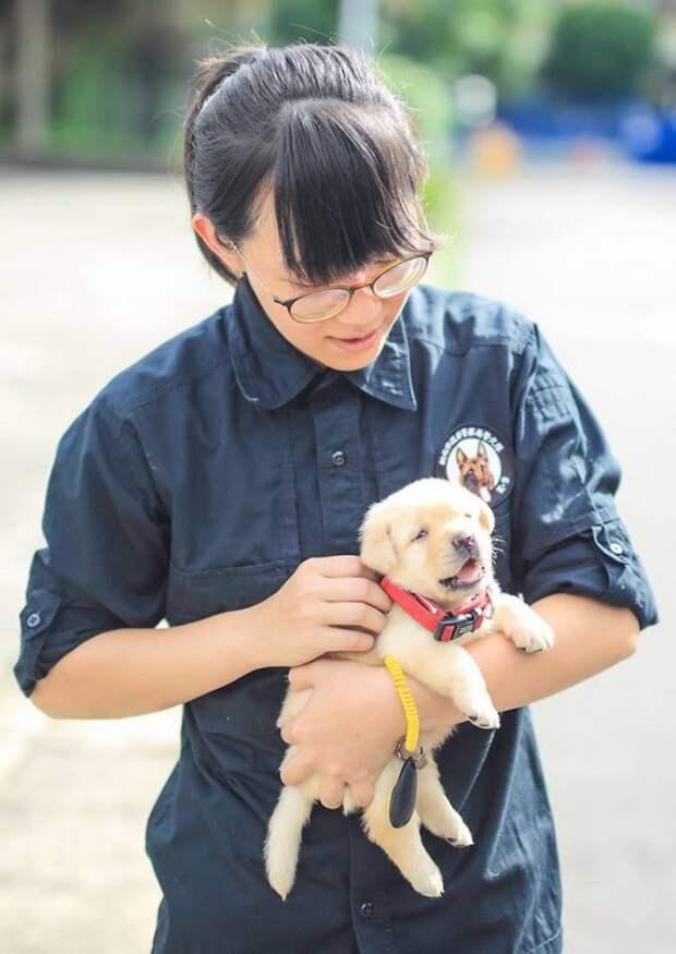 Полиция Тайваня взяла на службу милейших щенков лабрадора