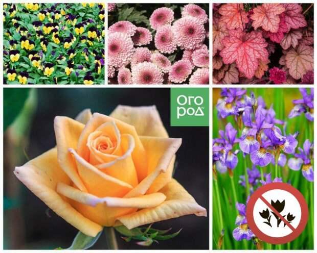 Цветы, которые нельзя сажать рядом
