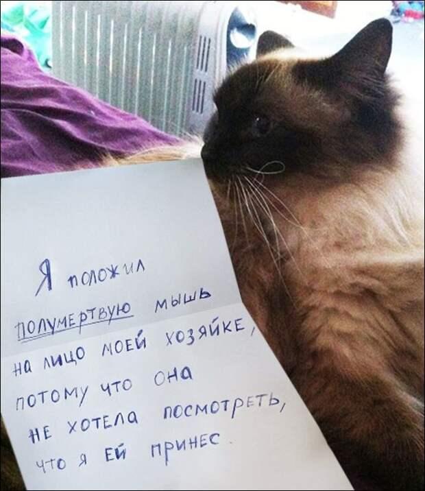 Провинившиеся коты