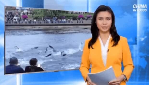 Аномальное поведение животных в Китае может предвещать катастрофу