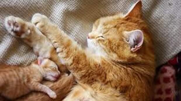 Молодая кошечка впервые родила котят и стала истошно мяукать — хозяйка поняла, в чем дело, когда заглянула в коробку с малышами