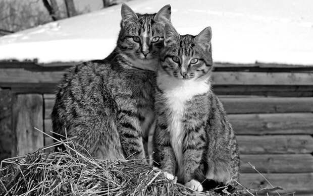 Любовь и обязательства Любовь, дети, коты