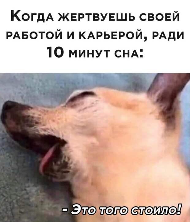 Подборка картинок. Вечерний выпуск (30 фото) - 27.11.2020
