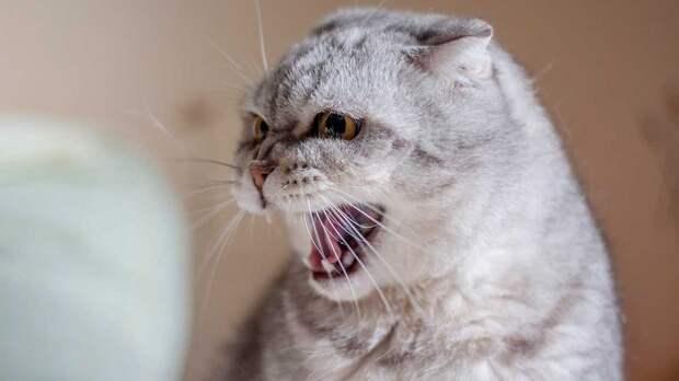 Агрессивность кошек связали с поведением их хозяев