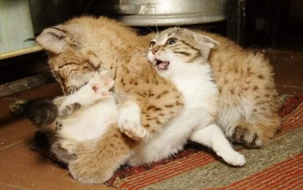 Необычная дружба зоопарки, коты, это интересно